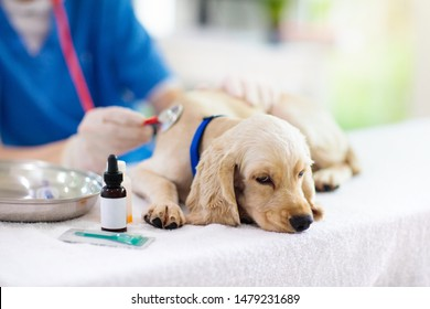 Vet examining dog. Puppy at veterinarian doctor. Animal clinic. Pet check up and vaccination. Health care.