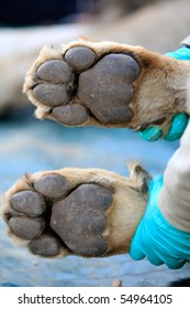 A vet holding two lion paws in her hands