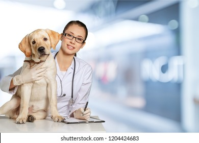Vet using technology with a little dog