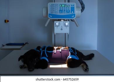 Vet X-ray, Veterinary care