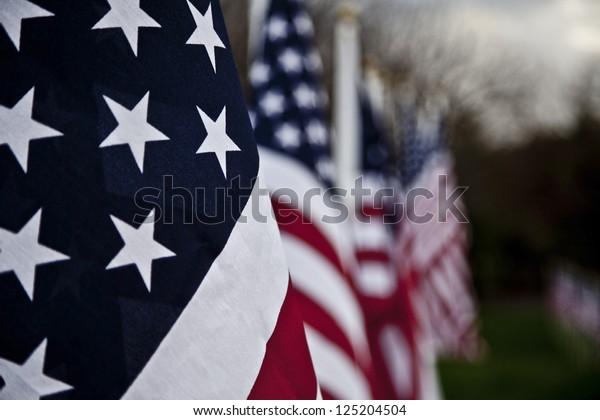 Veteran's Day Flags