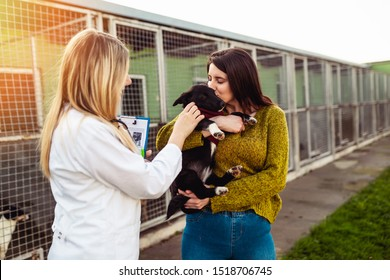 Veterinarian at animal shelter checking health of dogs.
