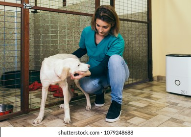 Veterinarian at animal shelter with a dog for adoption.