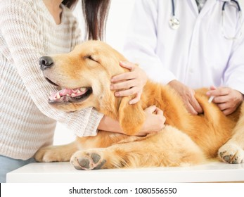 Veterinarian checking the dog golden retriever in pet clinic hospital