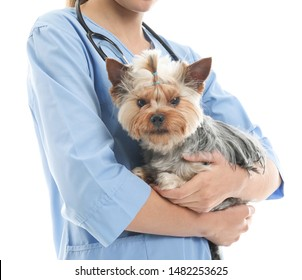 Veterinarian with cute dog on white background