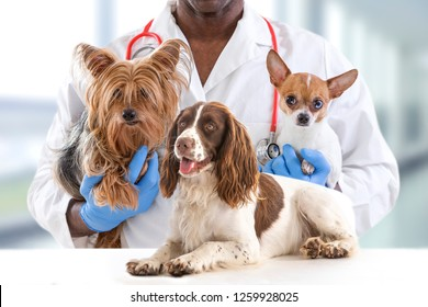 Veterinarian and cute pets luxery pet hospital background