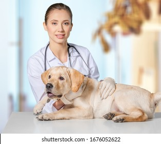 Veterinarian doctor examining cute dog in clinic