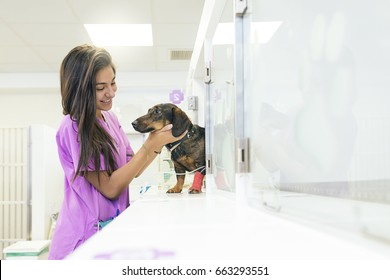 Veterinarian doctor hugging a beautiful dog. Veterinary Concept.