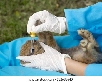 veterinarian doctor using eye drops for treatment young rabbit.