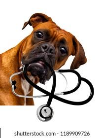a veterinarian dog
