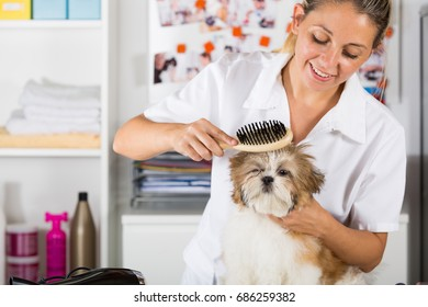 Veterinarian drying your dog Shih Tzu after a bath
