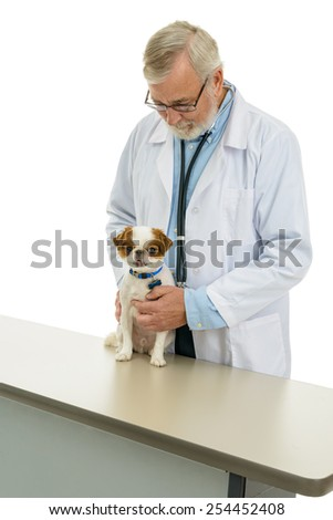 Veterinarian examining a cute dog.