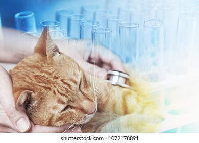 Veterinarian examining a kitten in animal hospital, Science for Pet Health Care Concept