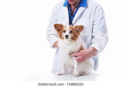 Veterinarian giving a dog a check up.