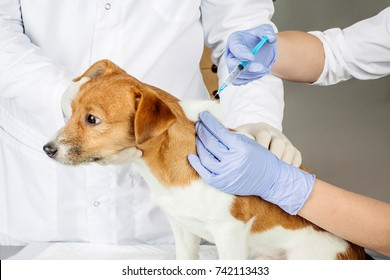 Veterinarian giving an injection to a dog