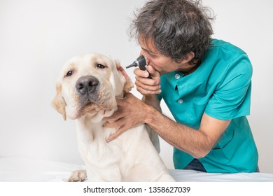 veterinarian with labrador dog in the consultation