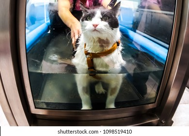 Veterinarian rehabilitation therapy to a cat on water