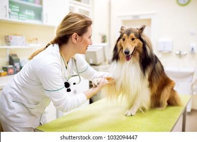 Veterinarian relaxing dog before examinig at pet ambulance