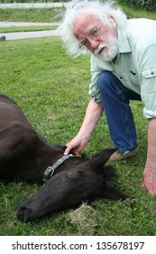 A veterinarian and a sleeping colt on green grass