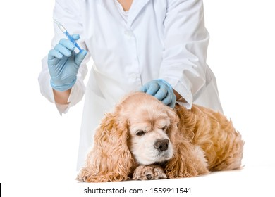 Veterinarian vaccinating cute dog against white background