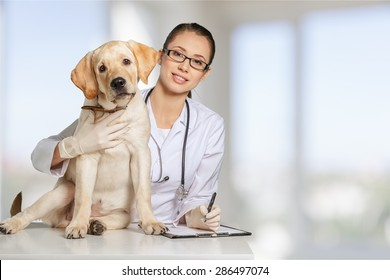 Veterinarian, vet, pet.