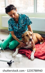 Veterinarian woman controlling dog with stethoscope in veterinary office