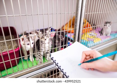 Veterinarian writing into a notepad about cats in cage