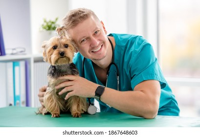 Veterinarian and yorkshire terrier in clinic