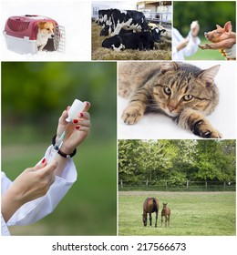 Veterinary care of pets and farm animals collection