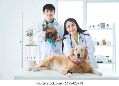 Veterinary concept. Dogs and cats vet in the hospital. Vet examining Golden Retriever dog and cat. Animal clinic. Pet check up and vaccination.