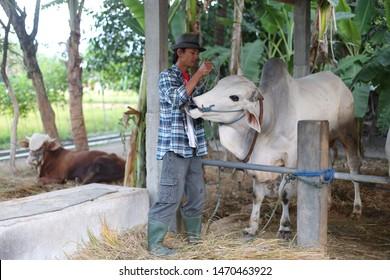 veterinary cow asian man holding head. yogyakata indonesia. august 5, 2019.