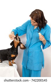 Veterinary doctor gives Basset Hound the apple