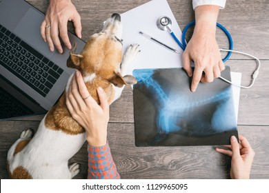 veterinary examination consultation with an X-ray. Dog and owners and doctors hands on the table with computer.