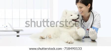 veterinary examination dog blood