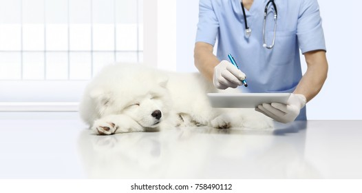 veterinary examination sick dog and using digital tablet, on vet clinic table
