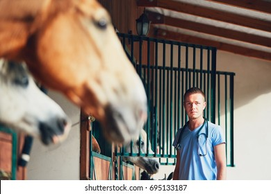Veterinary medicine at the farm. Veterinarian during medical exam of the horses in the stable.