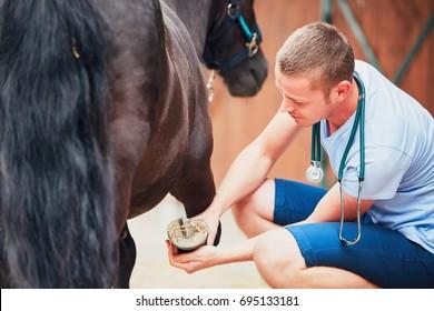 Veterinary medicine at the farm. Veterinarian examining horse leg.