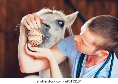 Veterinary medicine at farm. Veterinarian examining teeth of the horse in the stable.