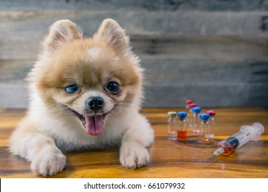 Veterinary medicine, pet, animals, health care and people concept - close up of Pomeranian dog sitting on wood floor with blur syringe and vials , drug injection or vaccination, wood background.