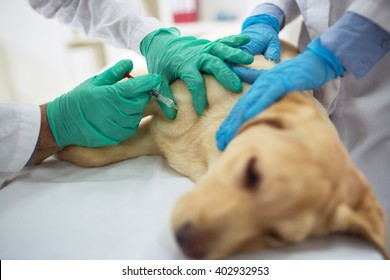 Veterinary surgeon is giving the vaccine to the sick dog
