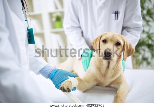 Veterinary Surgeon Treating Dog In Surgery, healthcare
