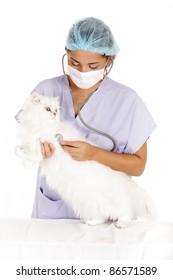 veterinary woman examining angora white cat