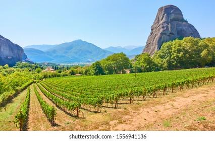 Vew of vineyard near Kastraki village in Thessaly, Greece - Greek rural landscape