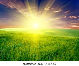 Vhery mach green grass under blue sky