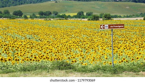Via Francigena signpost and sunflower field, Tuscany