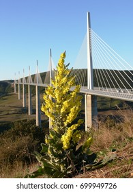 The viaduct of Millau in Aveyron with yellow flowers in foreground. France
