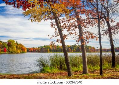Vibrant autumn colors of Oak Tress Along on the Apple River near Amery, Wisconsin, USA.
