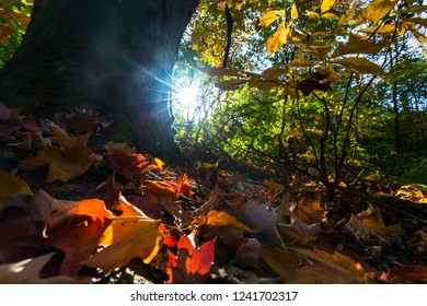 Vibrant autumn colors on a sunny day in the forest