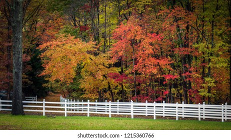 Vibrant autumn foliage behind a brilliant white fence
