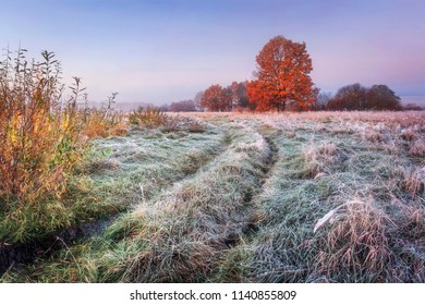 Vibrant autumn nature landscape. Grassy meadow with hoarfrost and colorful trees with red foliage on horizon in the autumn clear morning. Scenic view on november wild nature. Amazing fall